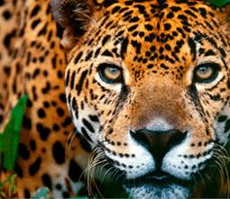 Best of Peru Itinerary
