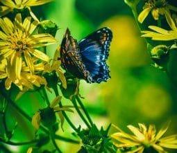 Butterfly Amazon Rainforest